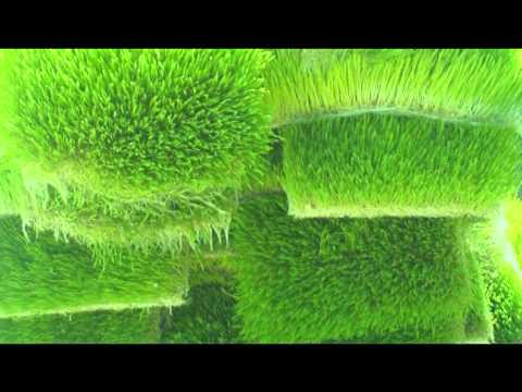 Ayurvet ProGreen Hydroponic Machine - Soilless Technology for Agriculture Produce