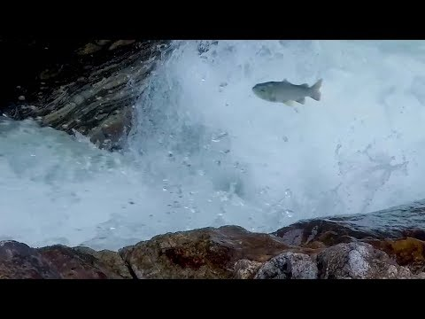 Carp leaping over the dragon's gate in northwest China