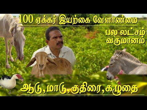 100 acre of agriculture and organic farming managed by 2 men and horse donkeys cows Bulls and goats   Meet the successful farmer Thiruvallur district Tamilnadu , he Manages the 100 acres of agricultural land with horse donkeys cows Bulls and goats,  according to him he never buys any fertiliser either organic or chemical from outside.  The fam uses only the manure created by the farm animals.  In 100 acres The main plantation of Goa date fruits and mull seetha fruit even in hot summer the plans and fruit trees are fresh and green  because of the natural manure and amrita jall   Agriculture,farming, agriculture tamil, agri, agriculture in tamil, agriculture and organic farming, agriculture and organic farming model, விவசாயம் சார்ந்த தொழில்கள், agricultural engineering, farm, cow, guppy fish, poultry farm, farm animals, iyarkai velanmai in tamil, farm guru, tamil news today    For More tamil news, tamil news today, latest tamil news, kollywood news, kollywood tamil news Please Subscribe to red pix 24x7 https://goo.gl/bzRyDm red pix 24x7 is online tv news channel and a free online tv