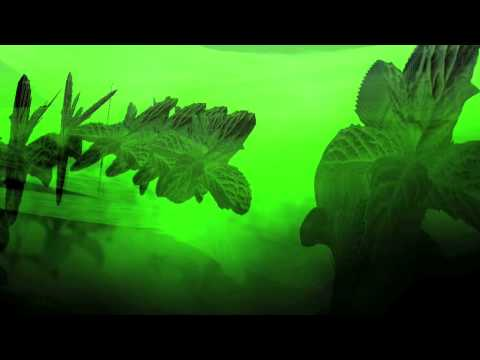Cio D'Or & Donato Dozzy VJ Heiligenblut - Menta - Green Green Spleen - 2009 - Time To Express