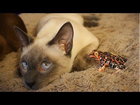 Уход за Тайской кошкой, Породы кошек