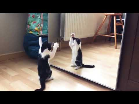 Funny Cat And mirror Video|Funny video|What's App Videos|30 Seconds Status Video|