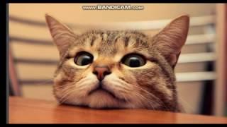 приколы котов пеня (Say_My_Name)