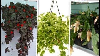20 plantas pendentes perfeitas para ambientes de meia sombra