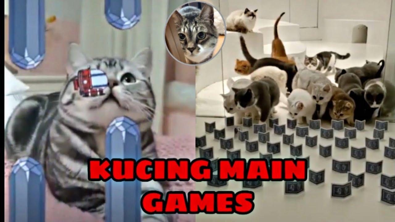 Viral Terkini Kumpulan Video Kucing Lucu Kucing Main