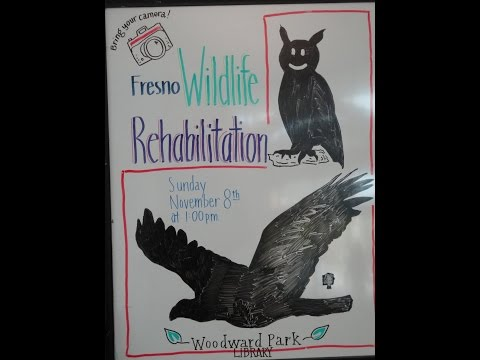 Fresno Wildlife Rehabilitation, Part One