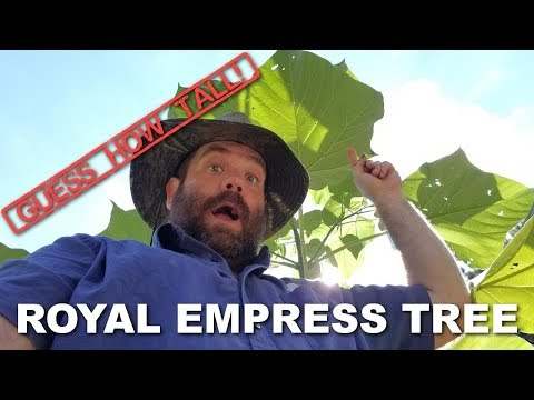 How Fast Does Royal Empress Tree Grow?