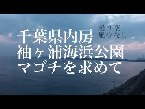 千葉県内房 袖ヶ浦海浜公園 マゴチを求めて