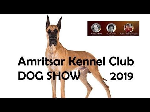 Great Dane Dog Show Amritsar Kennel Club - 2019
