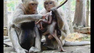 Why two Female monkeys do bad wrong like on baby monkey?Wild Monkey