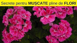 Paraziti la flori de camera - Parazitii plantelor de interior