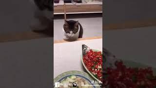 Mèo ngáo hài - Cat crazy 😂