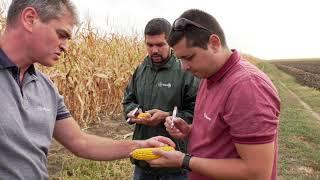 Декалб - генетика за високи добиви в царевица и рапица