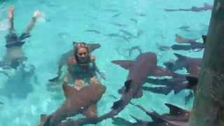 SWIMMING WITH THE SHARKS!! EXUMA BAHAMAS