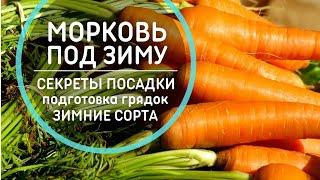 СЕКРЕТЫ посадки моркови под зиму