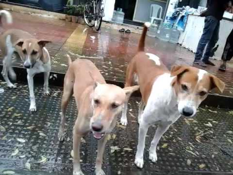 Me Feeding Stray Puppies On 5th August 2016  At About 2 30pm