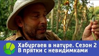В прятки с невидимками  Хабургаев в натуре  Сезон 2 | Живая Планета