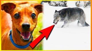5 Ting Du Ikke Vidste Om Hunde