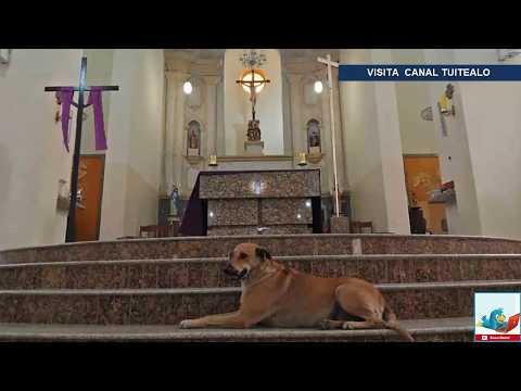 Sacerdote lleva perritos callejeros a misa para buscarles un hogar