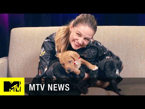 'Supergirl' Star Melissa Benoist Takes Our Super Puppy Challenge  MTV