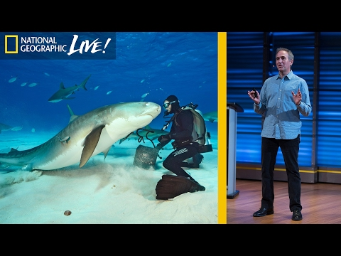 Swimming With Sharks: Photographing the Ocean's Top Predators (Part 1) | Nat Geo Live