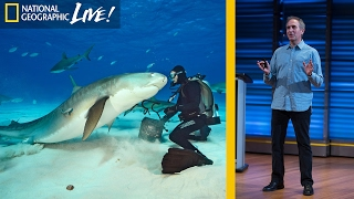 Swimming With Sharks  Photographing the Ocean's Top Predators (Part 1) | Nat Geo Live