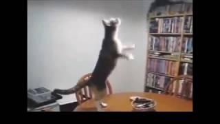 прикольные движения животных