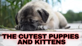 Cute Kittens And Puppies Videos  #kittens #puppies