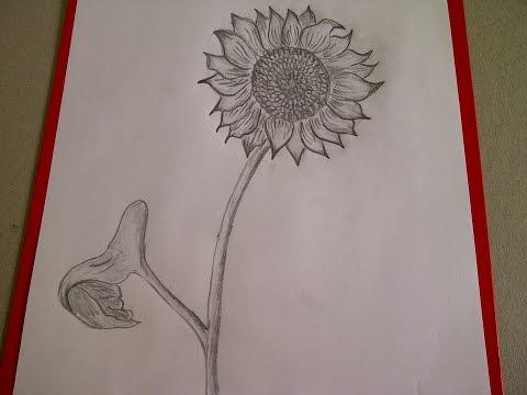 Sonnenblume zeichnen. Blume zeichnen. Zeichnen lernen für Anfänger