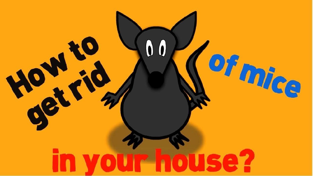 How to Get Rid of Mice in Your House Fast and Naturally YouTube
