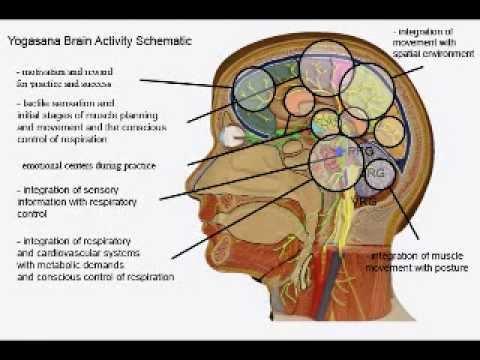 Imagini pentru ujjayi pranayama physiology