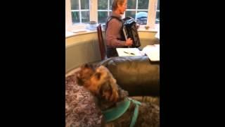 Georgie the Yorkie singing