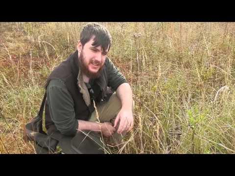Bushcraft Ecology: Grassy Field
