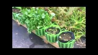Hybrid Rain Gutter Grow System Update
