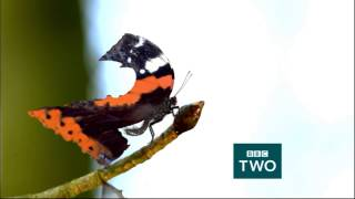 Butterfly - Springwatch - BBC Two Ident