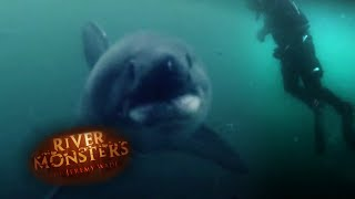swimming-with-salmon-sharks-river-monsters