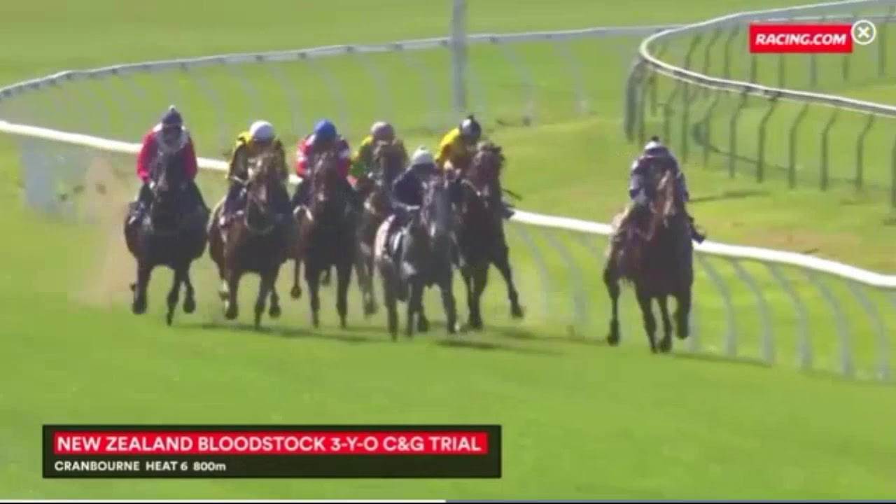 Regal Bloodstock - Our Regal Warrior 1st Trial - YouTube