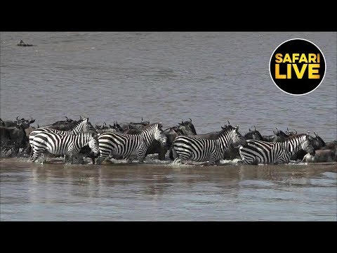 safariLIVE - Sunrise Safari - July 18, 2019