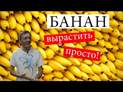 Как вырастить банан в домашних условиях