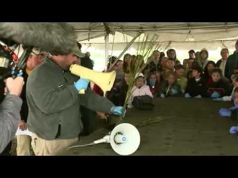 Isle de Jean Charles Floating Island Project-2013 1st place EPA/Gulf Guardian Award