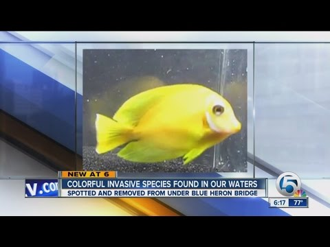 Colorful invasive species found in our waters