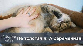 Как определить беременна ли кошка?