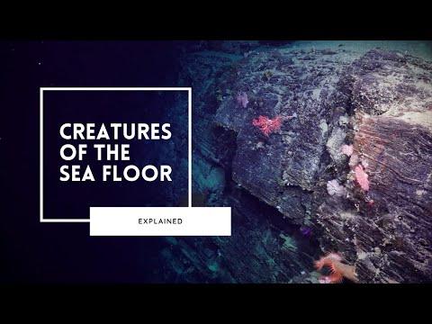 Exploring Life on the Deep Sea Floor