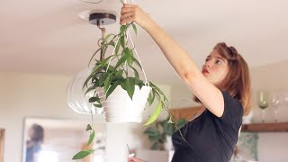 How to Install Swag Hooks to Hang Plants from the Ceiling (without a Stud Finder)