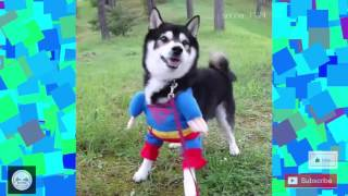 Spróbuj się nie zaśmiać CHALLANGE! Śmieszne Zwierzaki #2