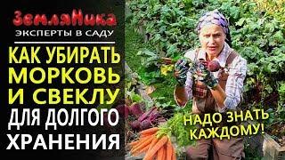 видео Хранение урожая: правила и практические советы