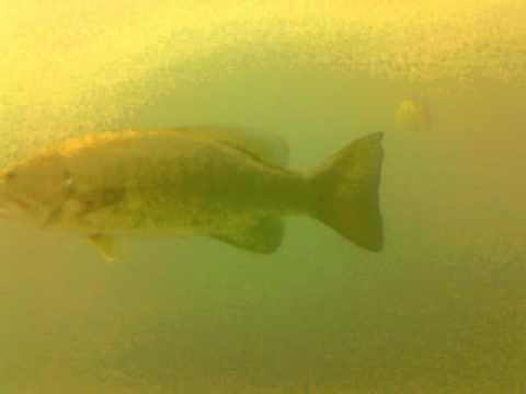 Bear Lake Michigan Scuba Dive