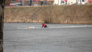 Мужик спасает собаку.MOV