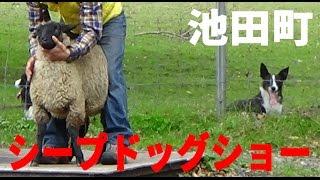 【今回訪問地】 ・池田町「BOYA FARM」シープドッグショー 北海道でも有...