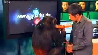 Wie viel Mensch steckt im Affen - Quarks & Co - Teil 2